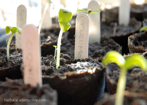 3 Secrets to Transplanting Seedlings