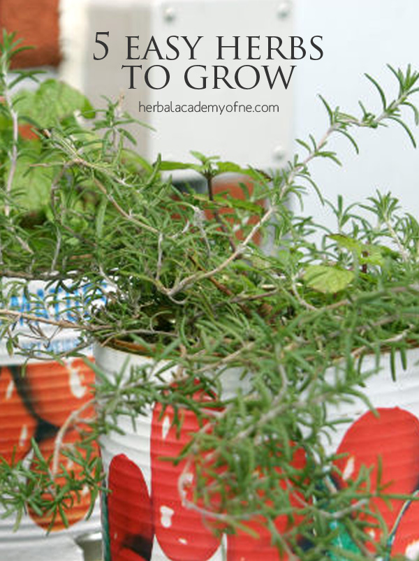 5 Easy Herbs To Grow