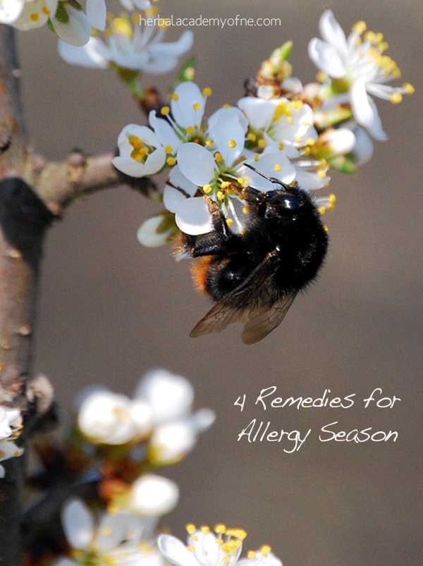 4 Natural Remedies for Allergy Season - Herbal Academy
