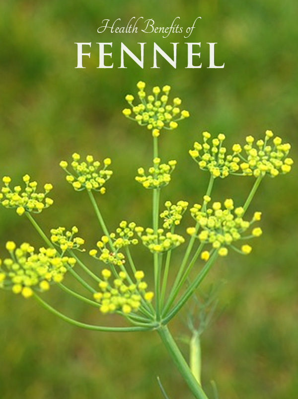 Health Benefits of Fennel - for gas relief