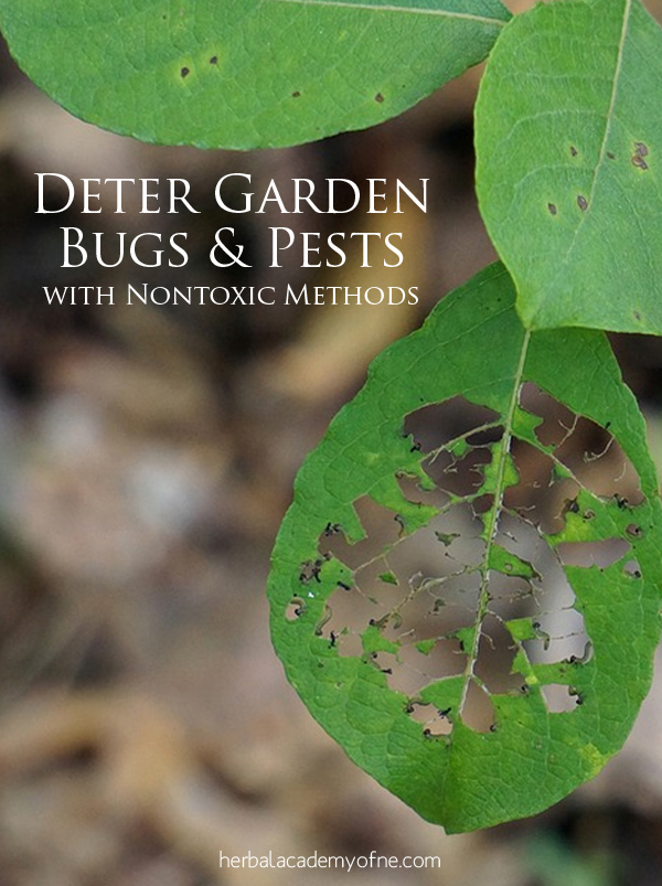 Natural Methods to Deter Garden Bugs and Pests