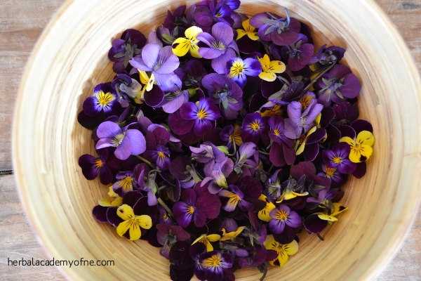 Bowl of Violet Flowers - Herbal Academy of New England
