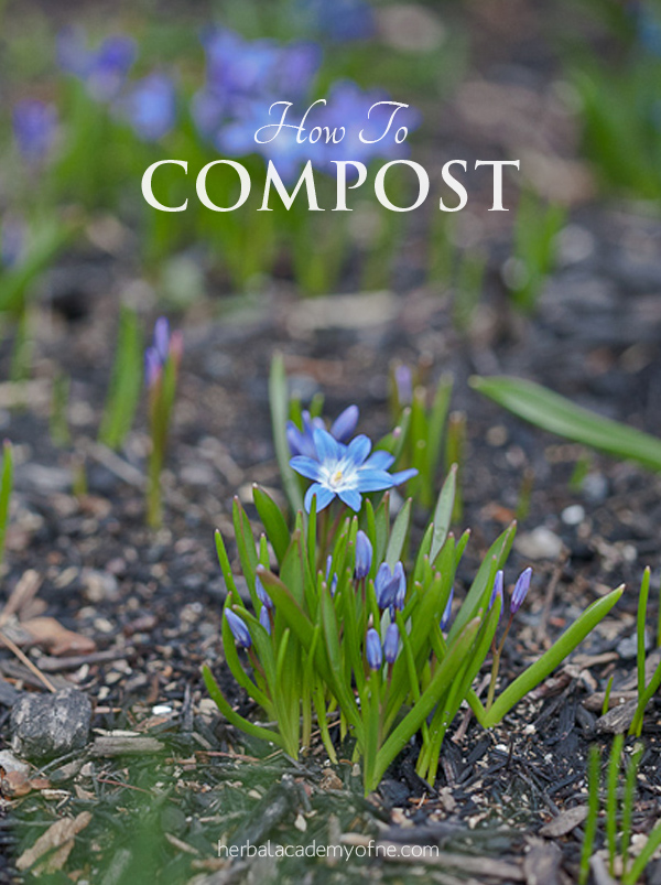 How to Compost - Ways to Reduce Food Waste