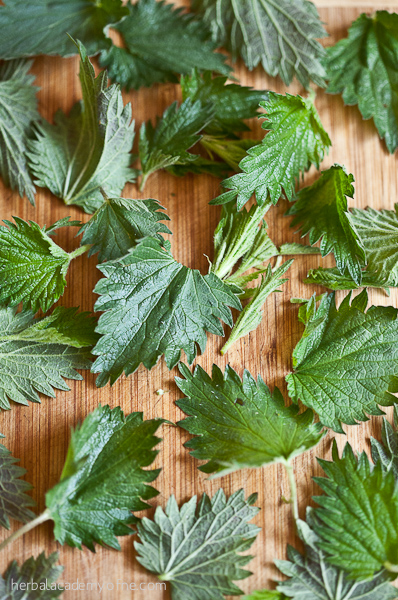 Harvesting and Cooking Nettles this Spring
