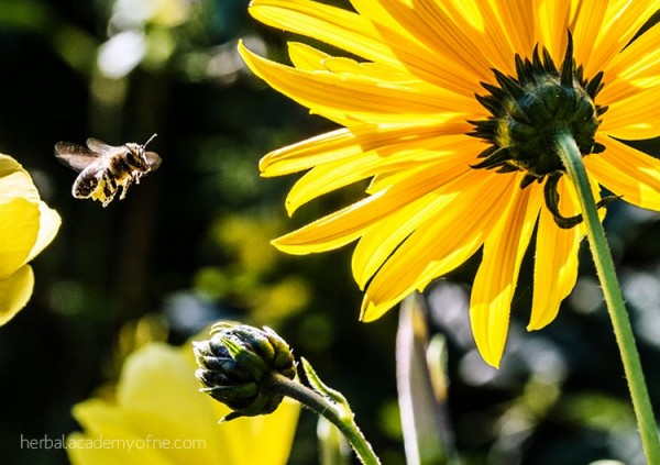 Bee informed - The Bee Population Decline and What To Do About It