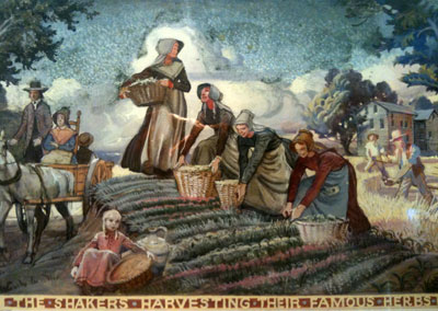 The Life of the Shakers: Shakers harvesting their famous herbs