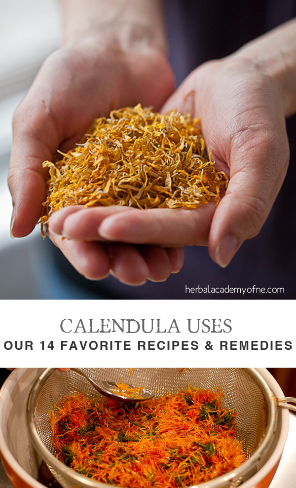 Calendula Uses- Our 14 Favorite Recipes and Remedies