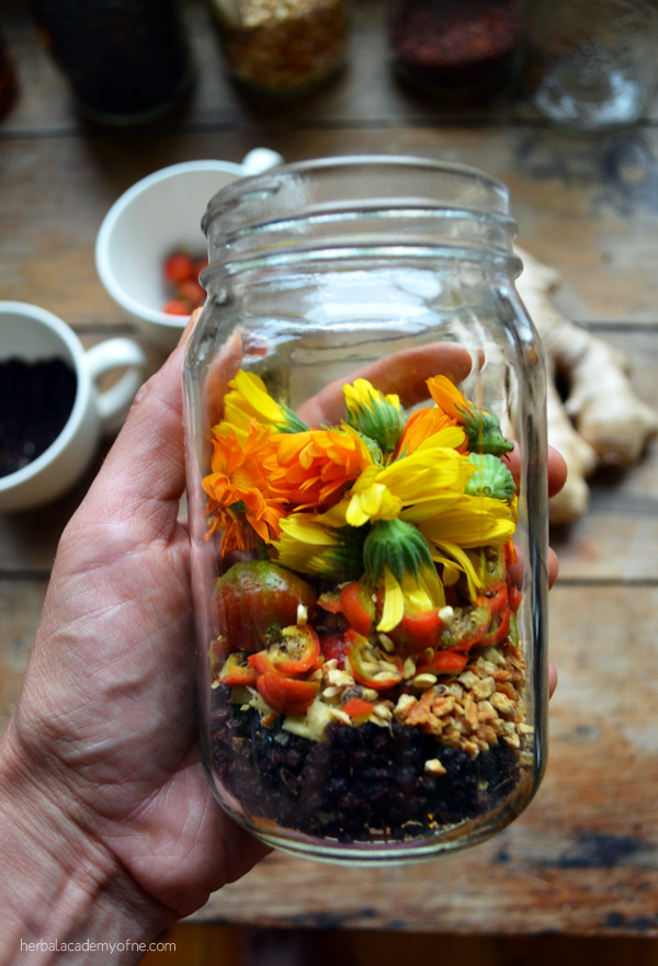Elderberry Calendula Cold and Flu Elixir | Herbal Academy | Elderberry is in many of our apothecaries as the go-to herb at the initial signs of the flu. Our Cold and Flu Elixir includes both elderflower and ginger.