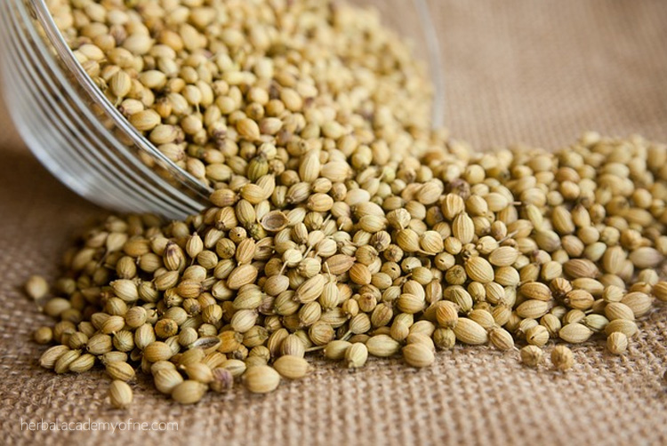 How To Save Seeds- From Harvesting to Using Them