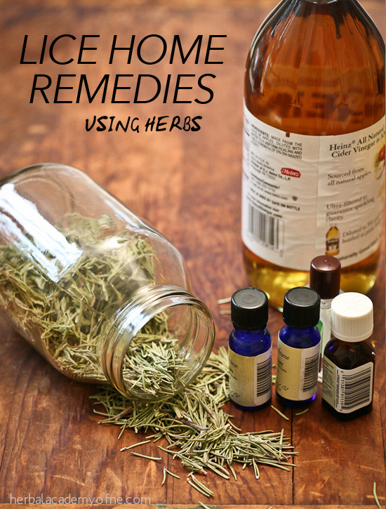 Lice Home Remedies Using Herbs by the Herbal Academy of New England
