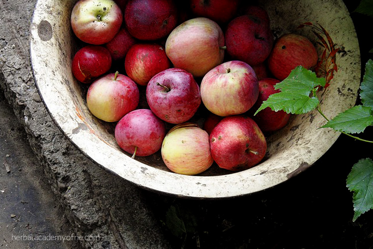 7 Tips from Nature for Keeping Healthy this Fall