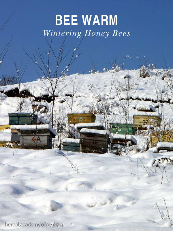 Bee Warm - Wintering Honey Bees