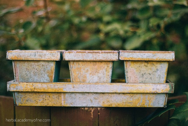 How to create a winter herb garden with success
