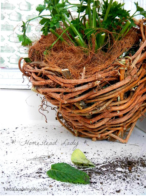 Winter Herb Garden for Children l Make the containers light and easy for children to use l Homestead Lady