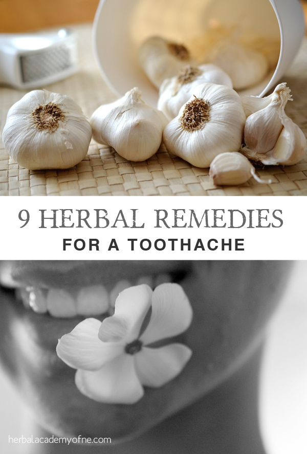 9 Herbal Remedies for a Toothache on the Herbal Academy blog