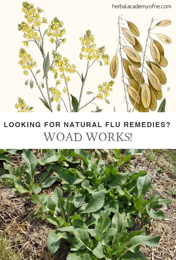 Looking for Natural Flu Remedies - Woad Works