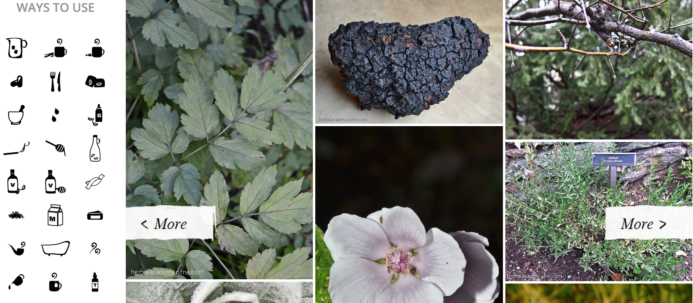 The Herbarium preview