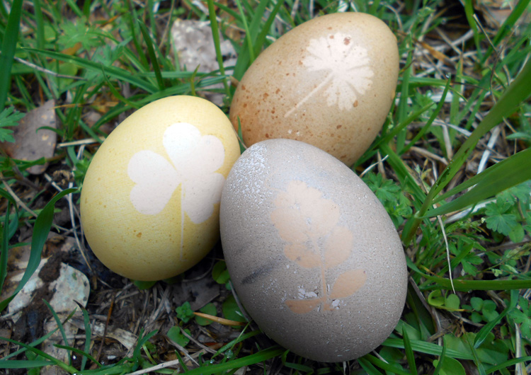 4 Easter Egg Decorating Techniques - Herbal Academy blog