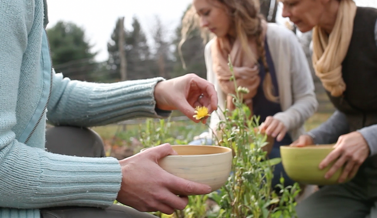 Building Relationships with Plants - Herbs Work as our Companions