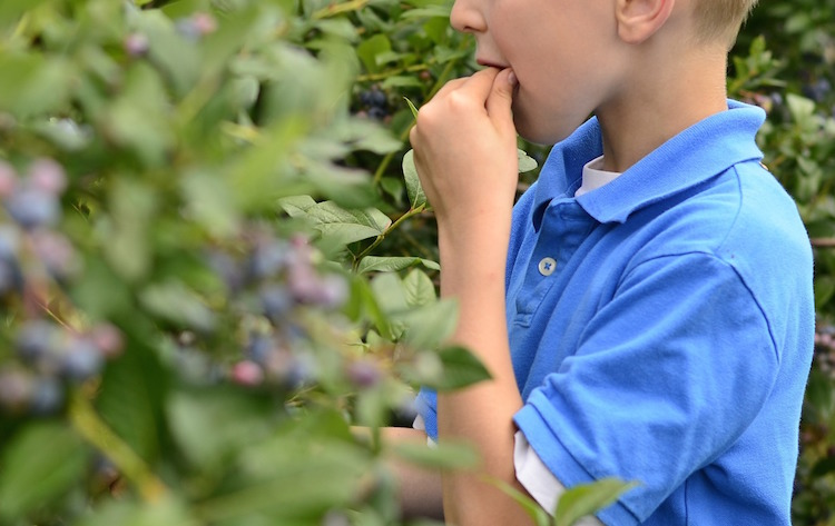 Herbs are tasty -Herbs for kids series