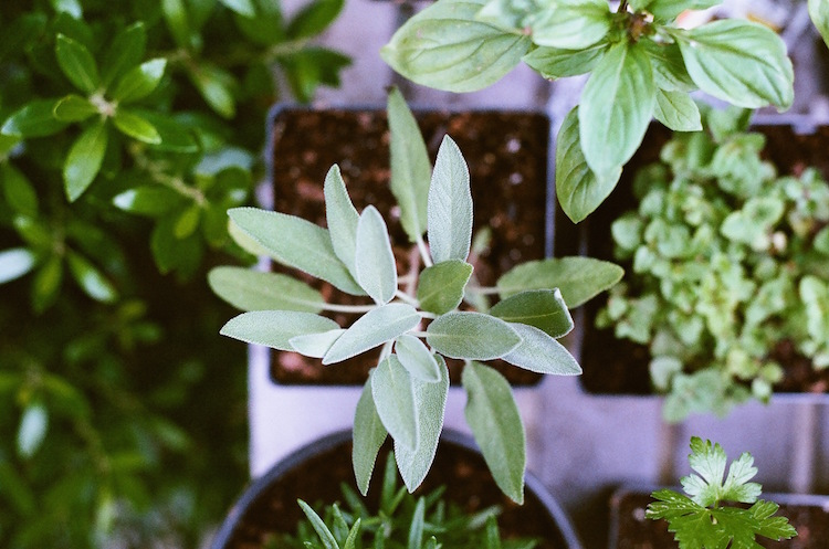 Share Plants for Thank an Herbalist Day, April 17!