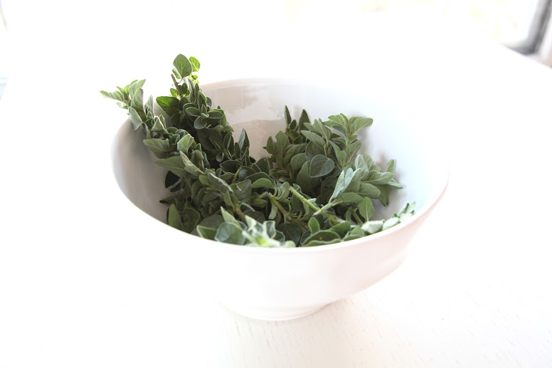 Oregano for Healing and Nutrition