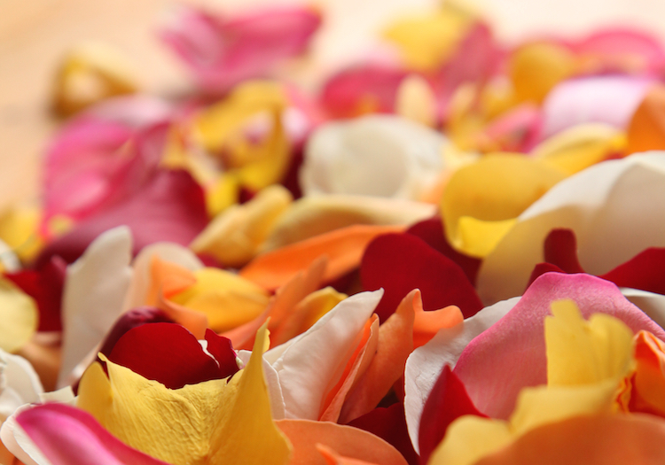 Rose Petals for Making Country Wine