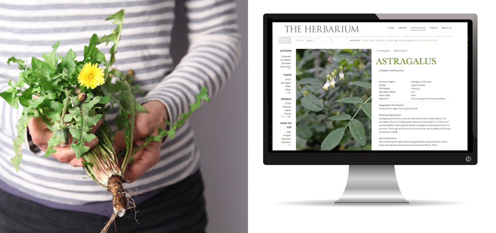 how to become an herbalist for free