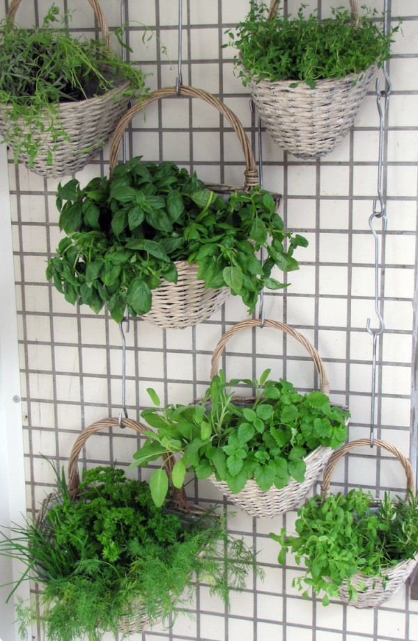 Herbs that Grow In Unlikely Locations - Wall Gardens