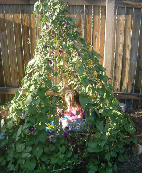 Create A Living Tent From Useful Plants