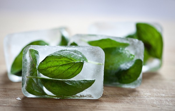 Preserving Herbs by Freezing: Oregano Ice Cubes