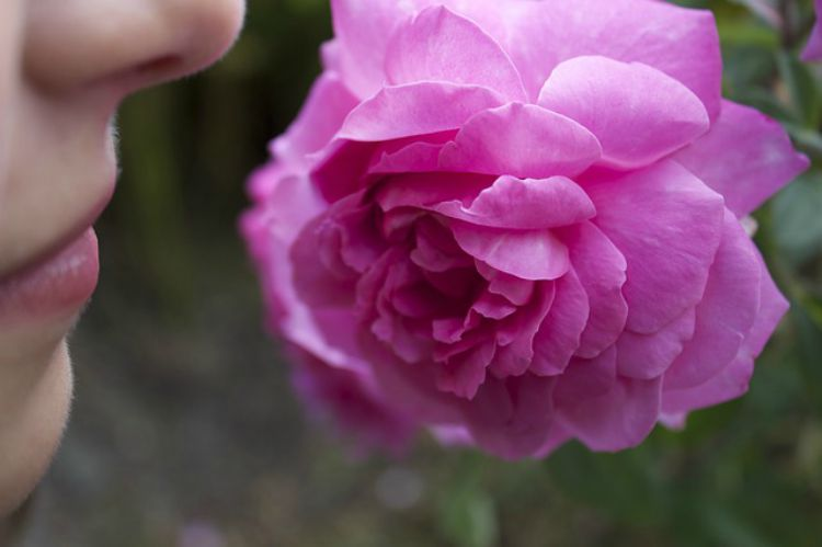 The Comforts Of Rose: A Soothing Nervine