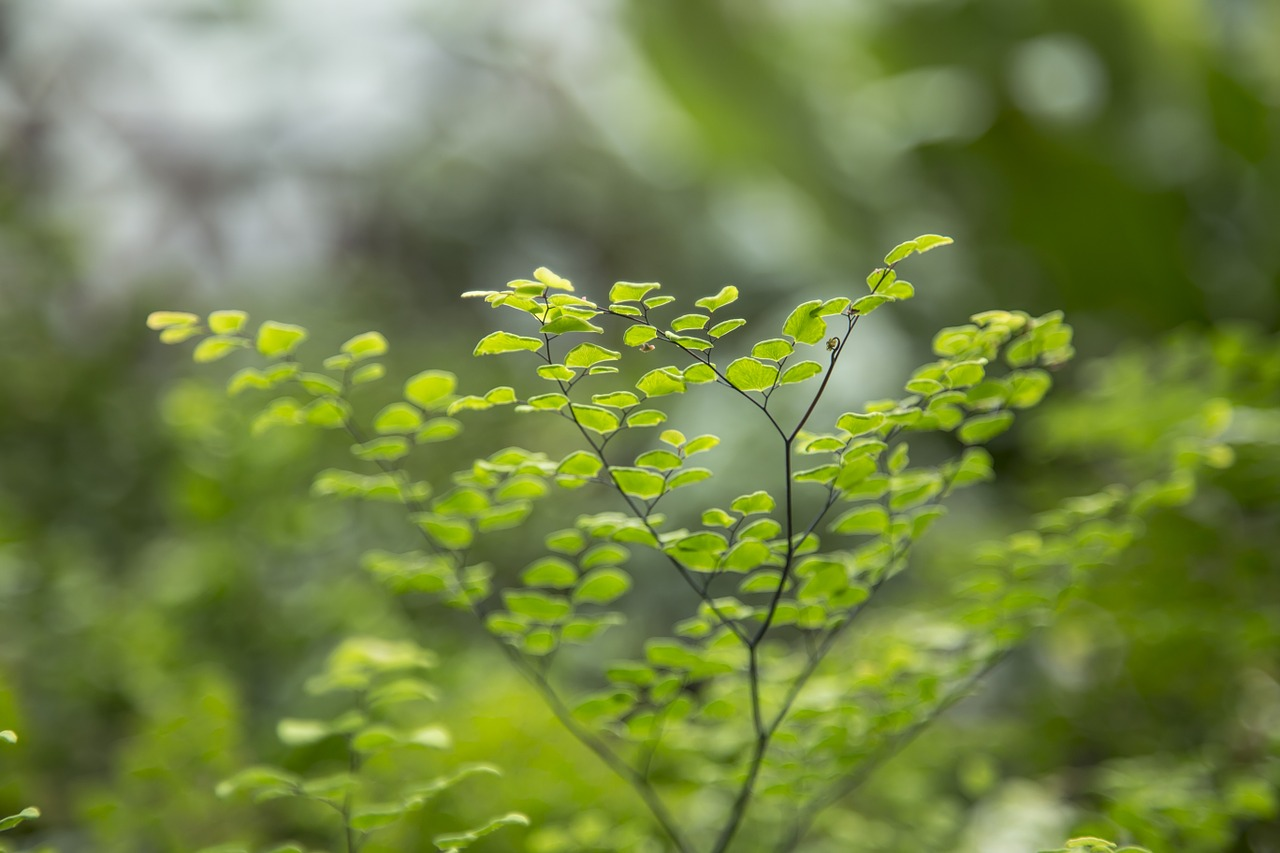 Basic Botany: Describing Leaves and Plant Identification