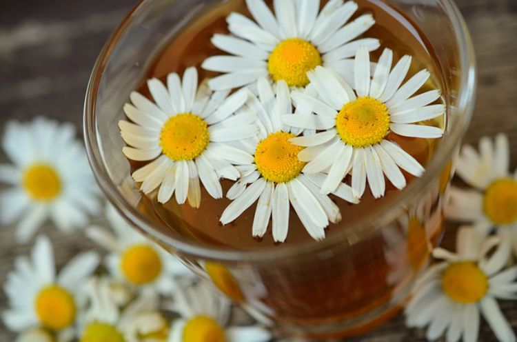 A Family Herb: Chamomile Flower, Be Prepared