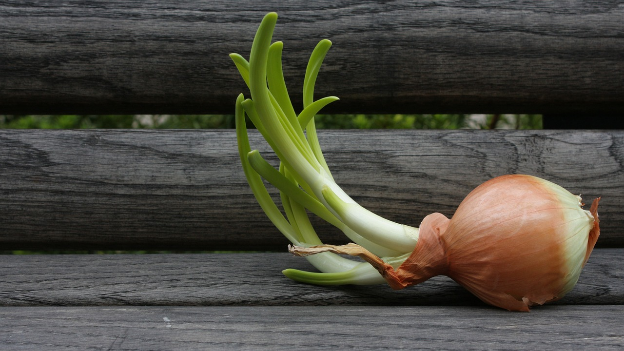 Learn about Tubers, Corms, and Roots: Herbs Underground